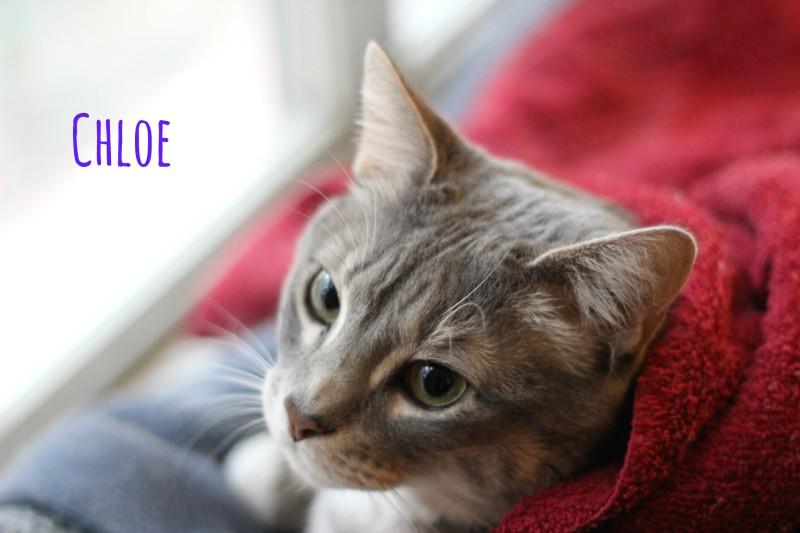 Chloe the cat