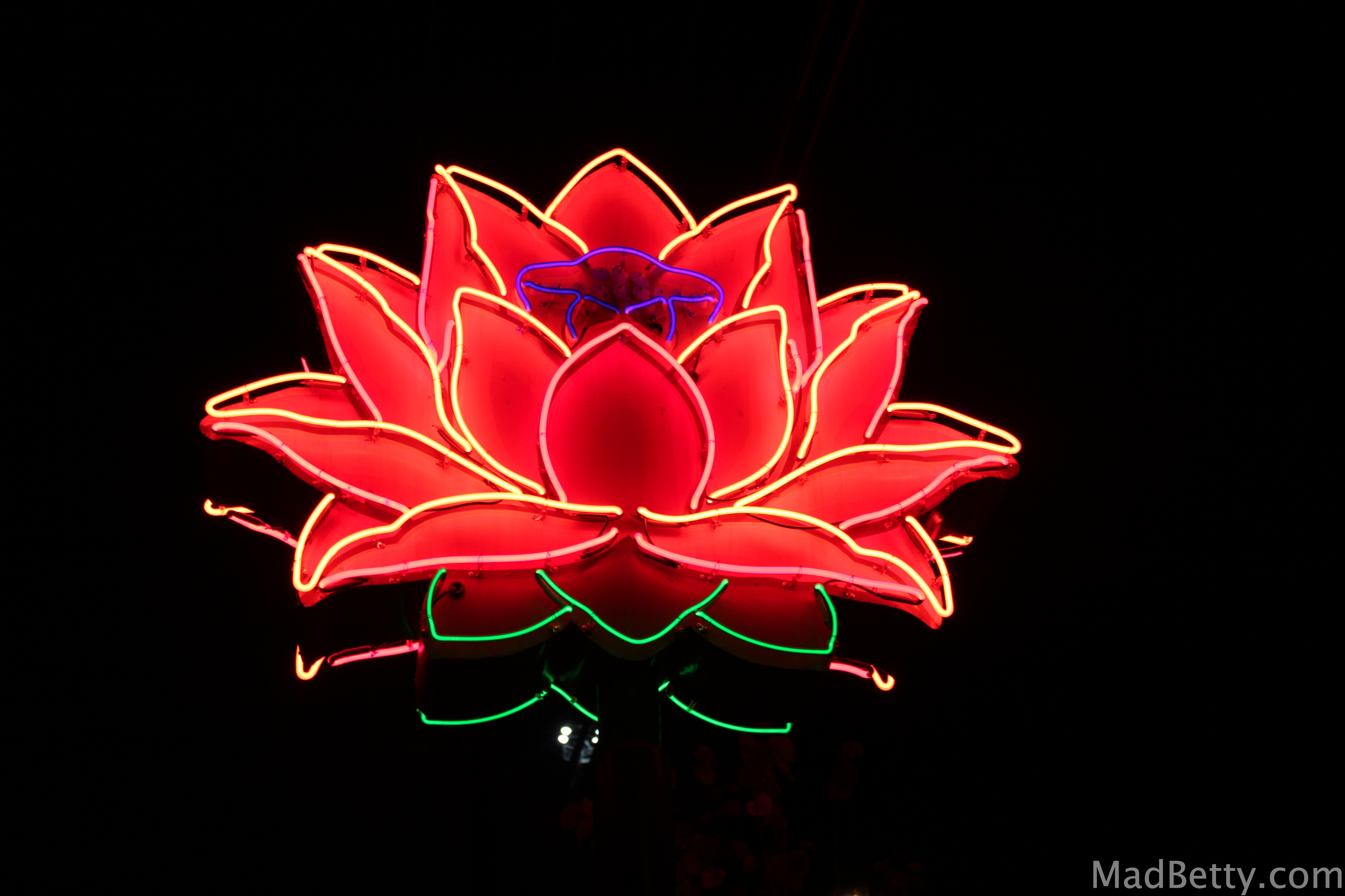 South austin archives page 2 of 2 mad betty neon lotus flower dhlflorist Choice Image