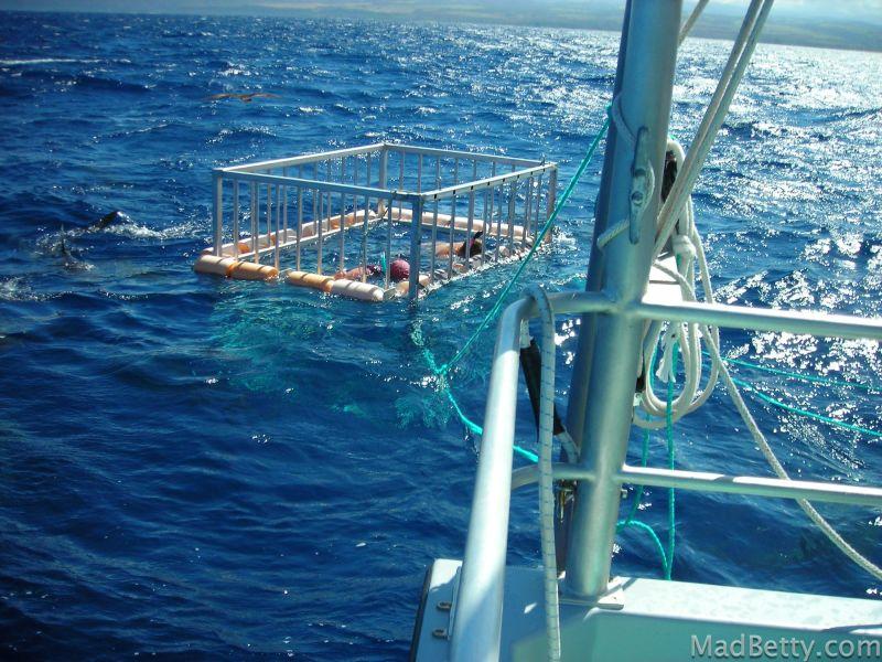 Shark cage North Shore Shark Adventures, Hawaii