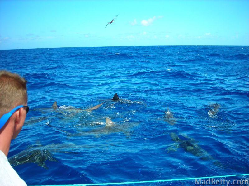 Shark infested waters, Hawaii