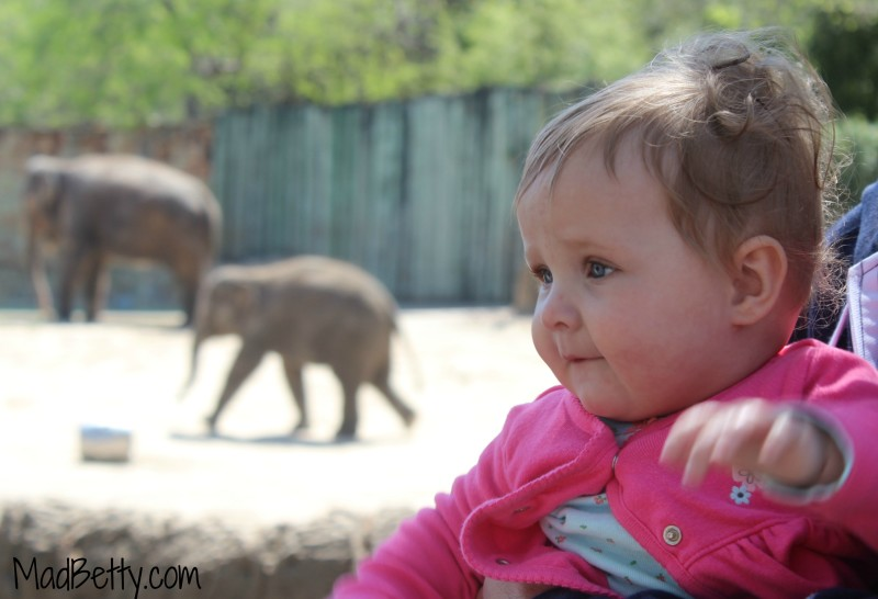Violet and Elephants at Fort Worth Zoo